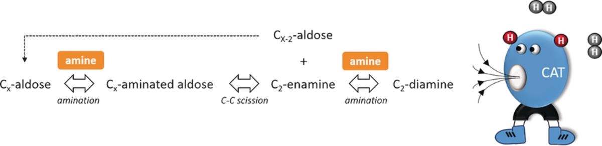 Low‐Temperature Reductive Aminolysis of Carbohydrates to Diamines and Aminoalcohols by Heterogeneous Catalysis
